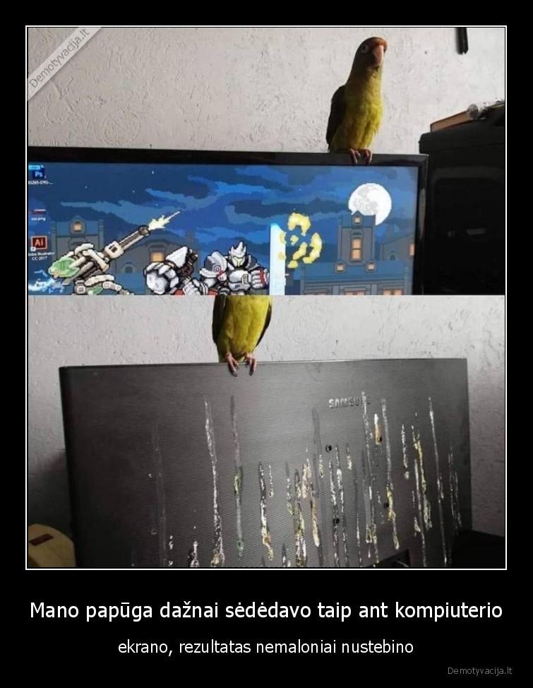 Mano papuga daznai sededavo taip ant kompiuterio ekrano rezultatas nemaloniai nustebino