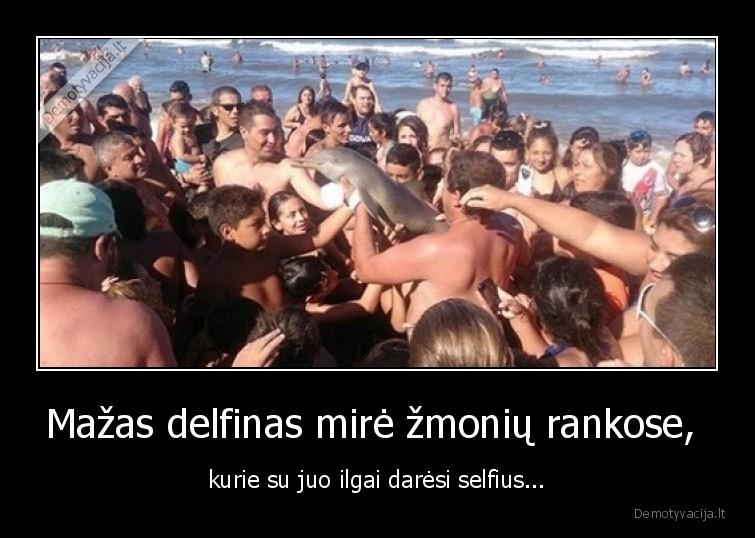 Mazas delfinas mire zmoniu rankose kurie su juo ilgai daresi selfius