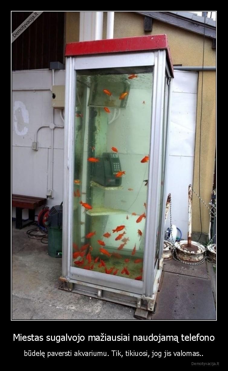 Miestas sugalvojo maziausiai naudojama telefono budele paversti akvariumu. Tik tikiuosi jog jis valomas