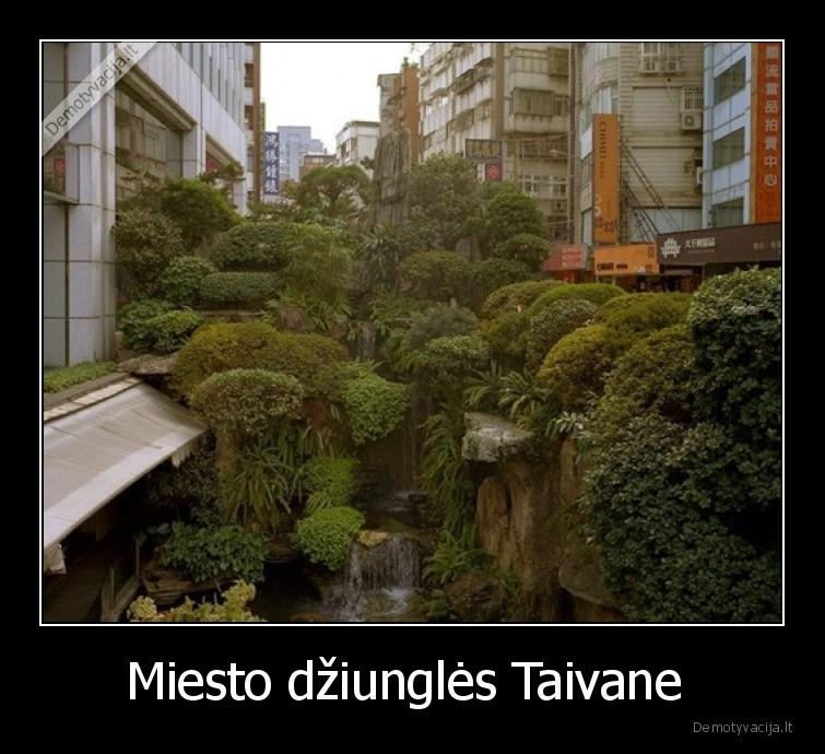 Miesto dziungles Taivane