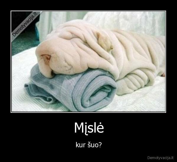 Mįslė - kur šuo?.