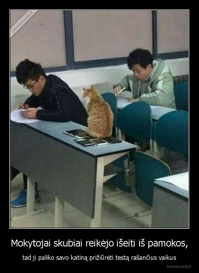 Mokytojai skubiai reikejo iseiti is pamokos tad ji paliko savo katina priziureti testa rasancius vaikus