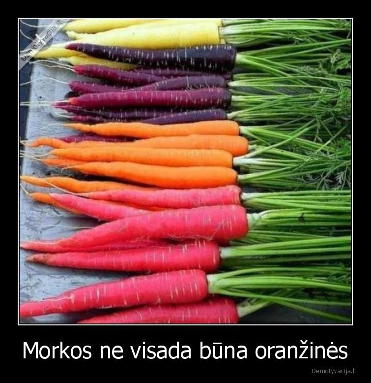 Morkos ne visada buna oranzines