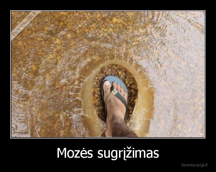Mozes sugrizimas