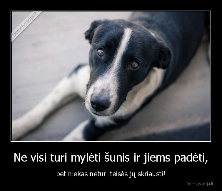 Ne visi turi myleti sunis ir jiems padeti bet niekas neturi teises ju skriausti
