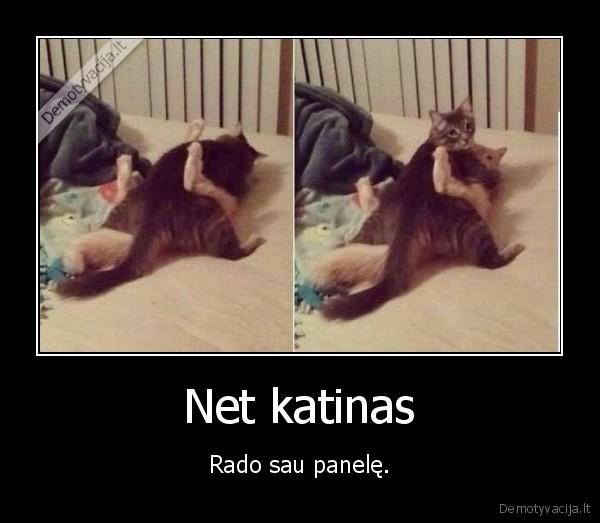 Net katinas Rado sau panele