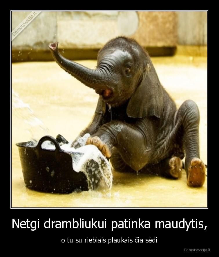 Netgi drambliukui patinka maudytis o tu su riebiais plaukais cia sedi