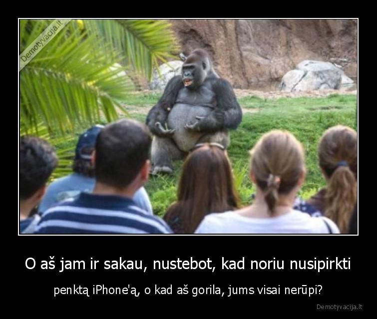 O as jam ir sakau nustebot kad noriu nusipirkti penkta iPhonea o kad as gorila jums visai nerupi