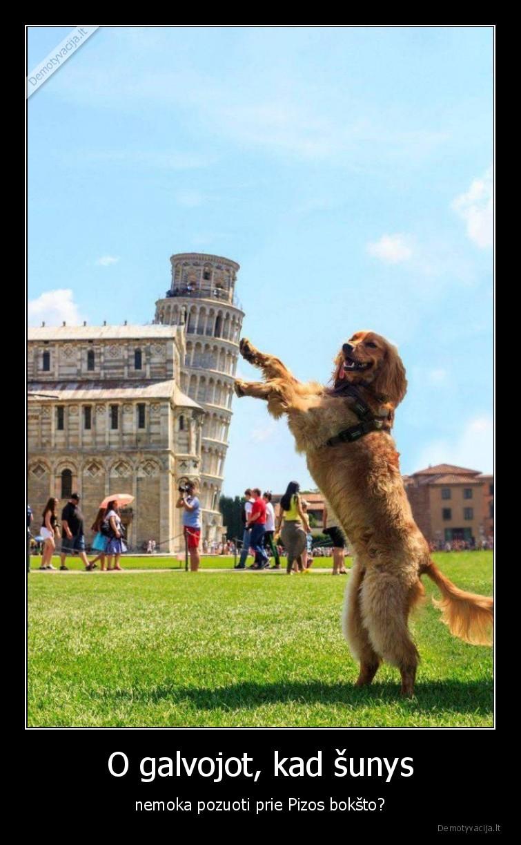 O galvojot kad sunys nemoka pozuoti prie Pizos boksto