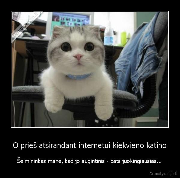 O pries atsirandant internetui kiekvieno katino seimininkas mane kad jo augintinis pats juokingiausias