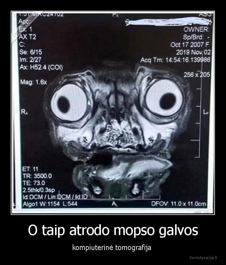 O taip atrodo mopso galvos kompiuterine tomografija