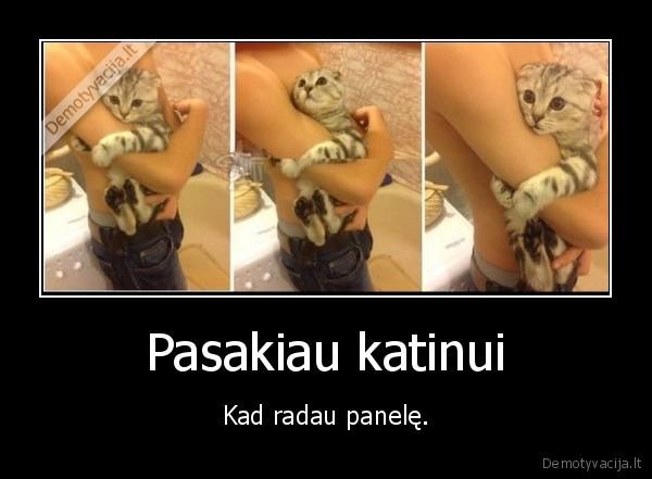 Pasakiau katinui Kad radau panele