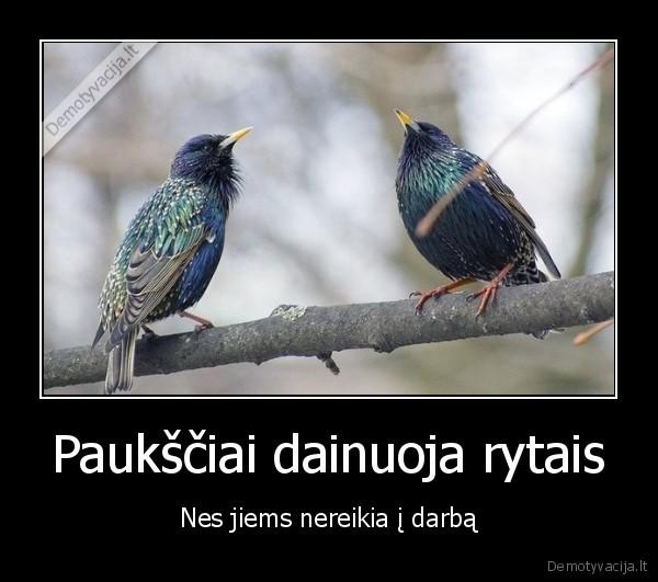 Pauksciai dainuoja rytais Nes jiems nereikia i darba
