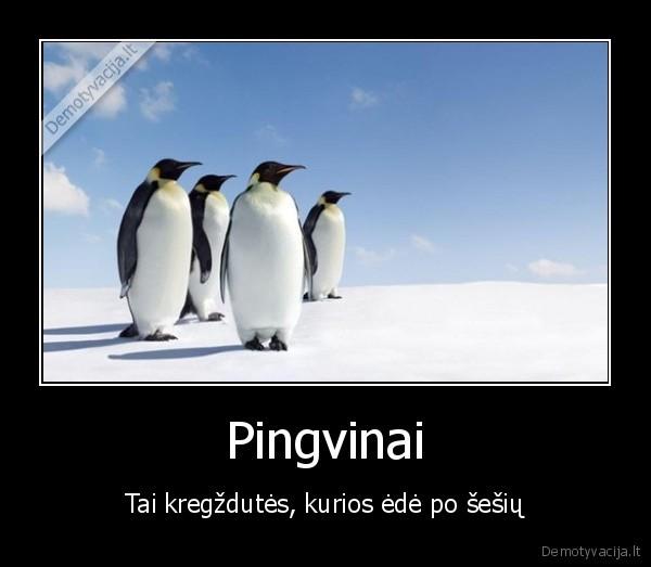 Pingvinai Tai kregzdutes kurios ede po sesiu