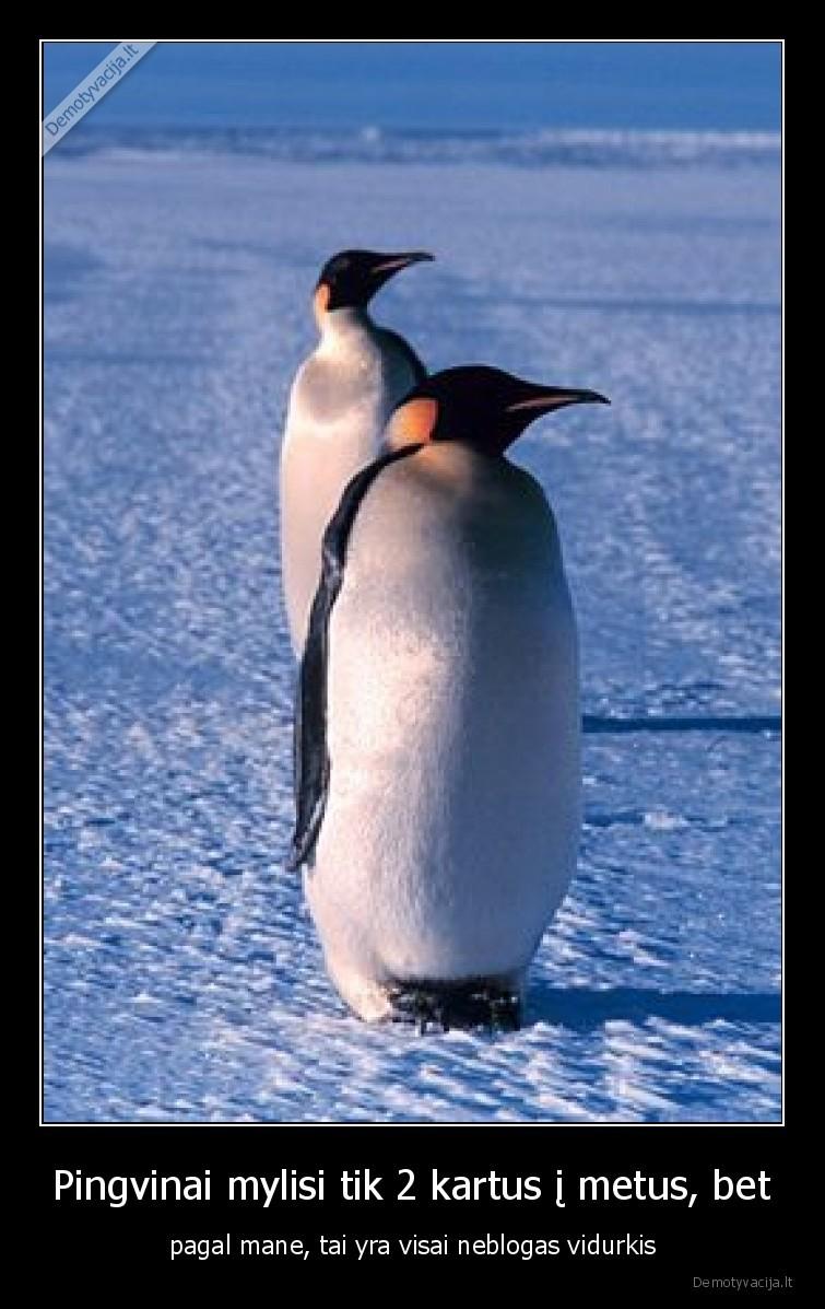 Pingvinai mylisi tik 2 kartus i metus bet pagal mane tai yra visai neblogas vidurkis