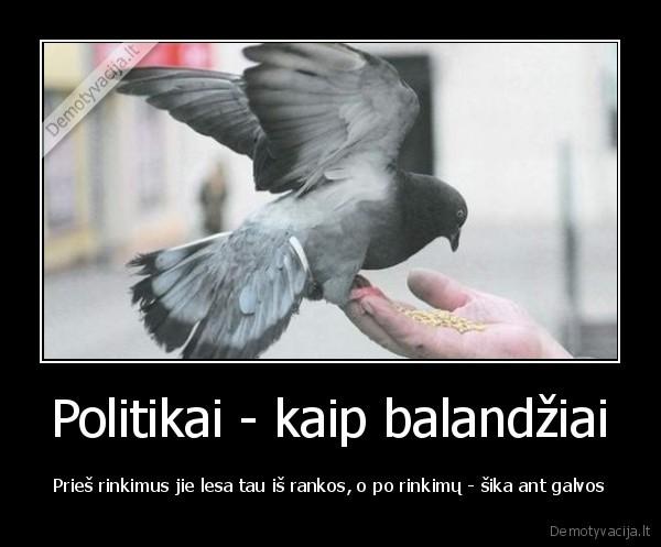 Politikai kaip balandziai Pries rinkimus jie lesa tau is rankos o po rinkimu sika ant galvos