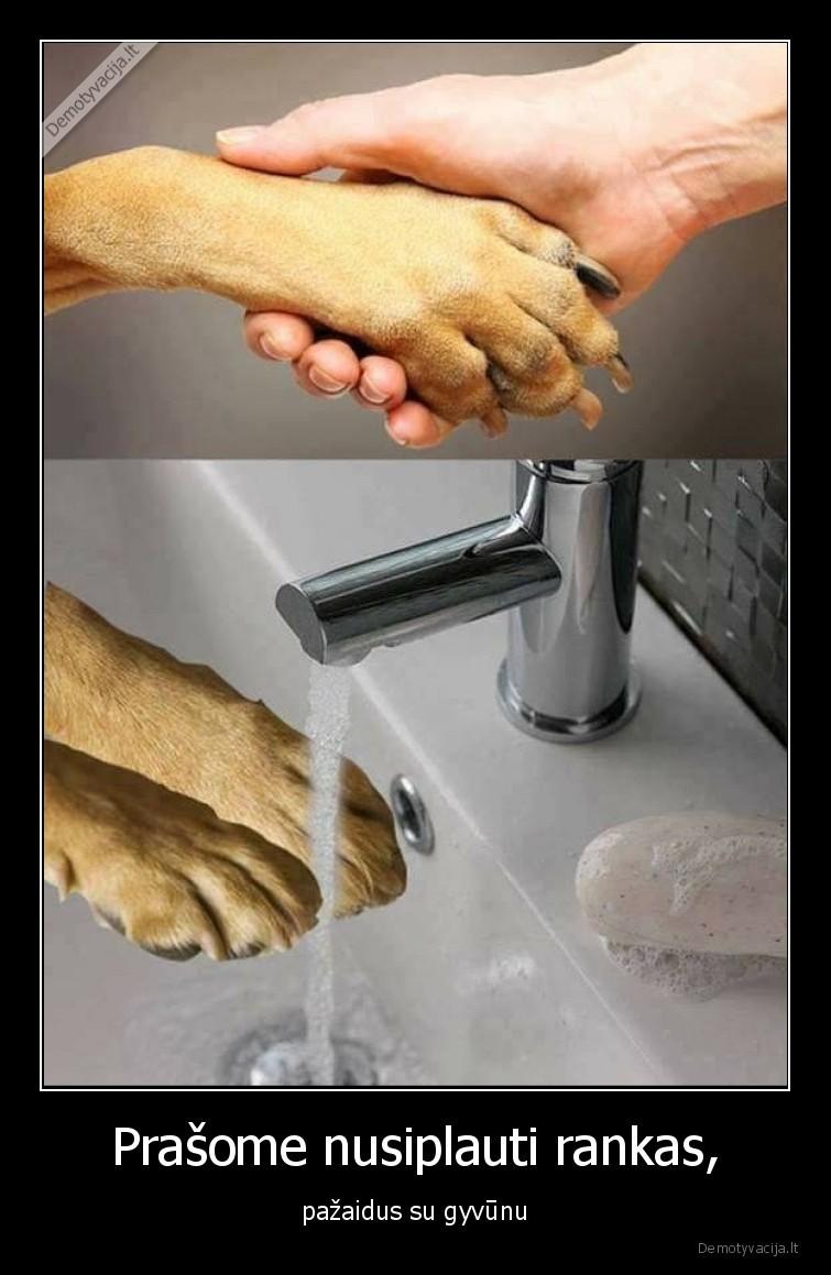 Prasome nusiplauti rankas pazaidus su gyvunu