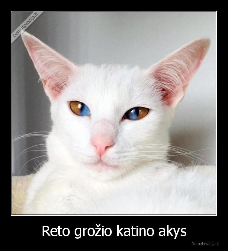 Reto grozio katino akys