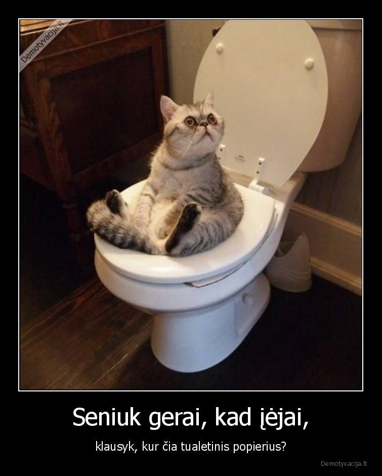 Seniuk gerai kad iejai klausyk kur cia tualetinis popierius