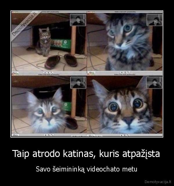 Taip atrodo katinas kuris atpazista Savo seimininka videochato metu