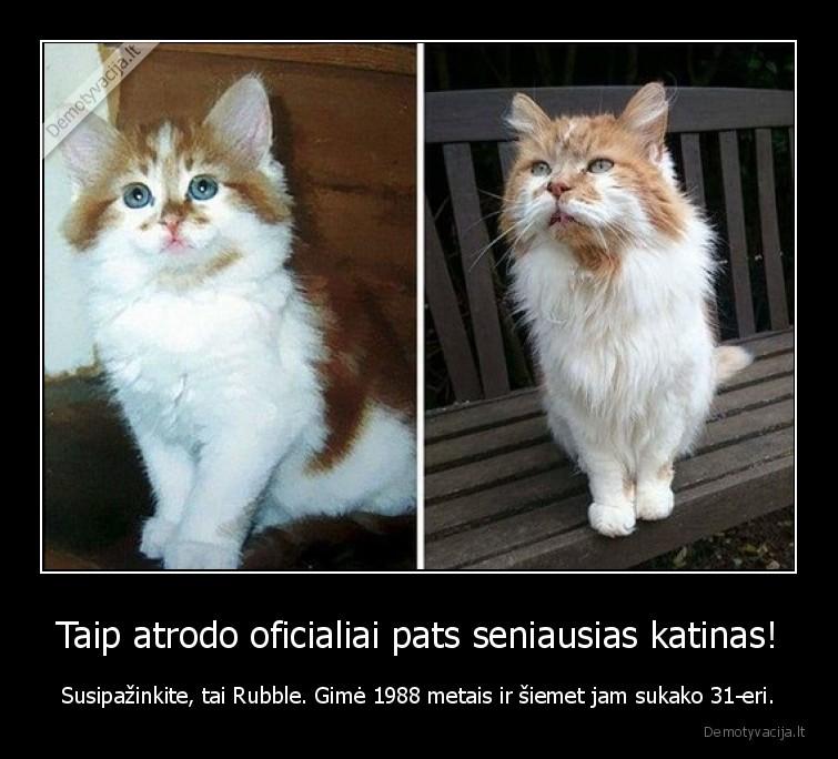 Taip atrodo oficialiai pats seniausias katinas Susipazinkite tai Rubble. Gime 1988 metais ir siemet jam sukako 31 eri