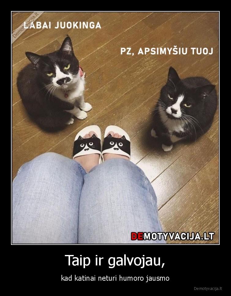 Taip ir galvojau kad katinai neturi humoro jausmo