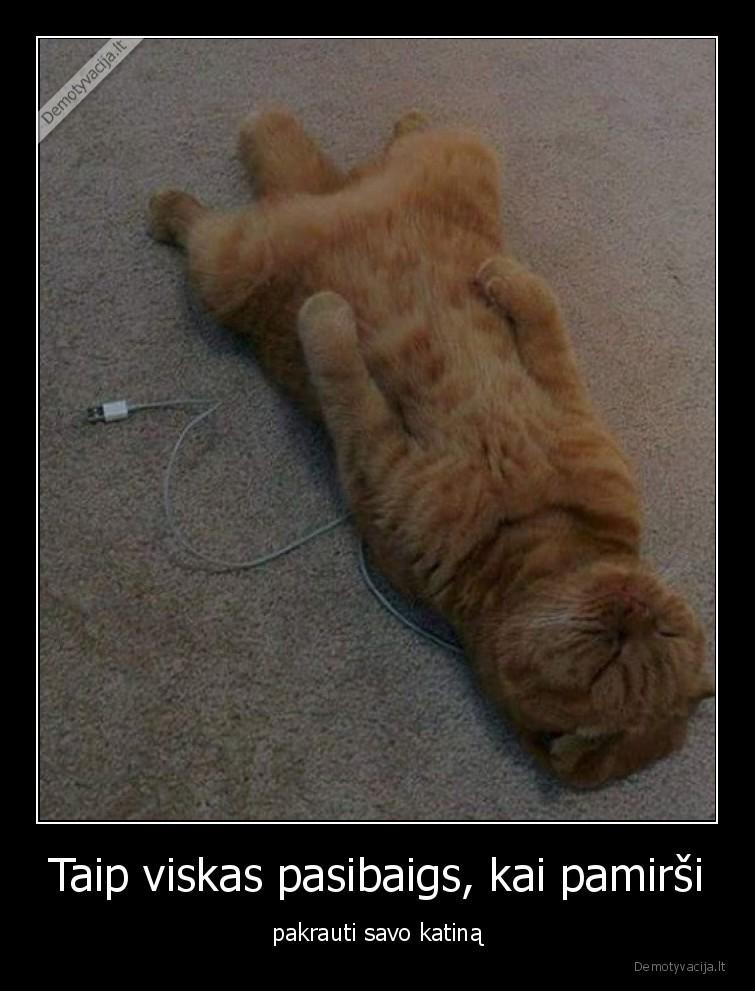 Taip viskas pasibaigs kai pamirsi pakrauti savo katina