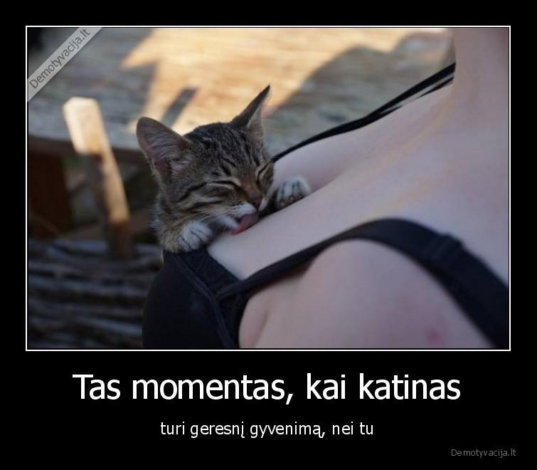 Tas momentas kai katinas turi geresni gyvenima nei tu