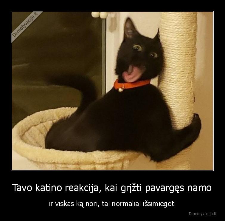 Tavo katino reakcija kai grizti pavarges namo ir viskas ka nori tai normaliai issimiegoti