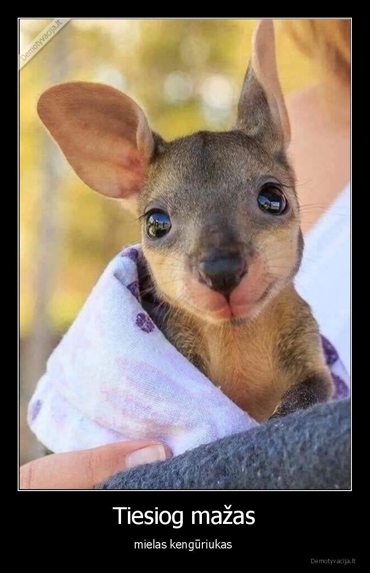 Tiesiog mazas mielas kenguriukas