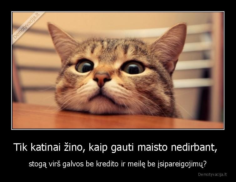 Tik katinai zino kaip gauti maisto nedirbant stoga virs galvos be kredito ir meile be isipareigojimu