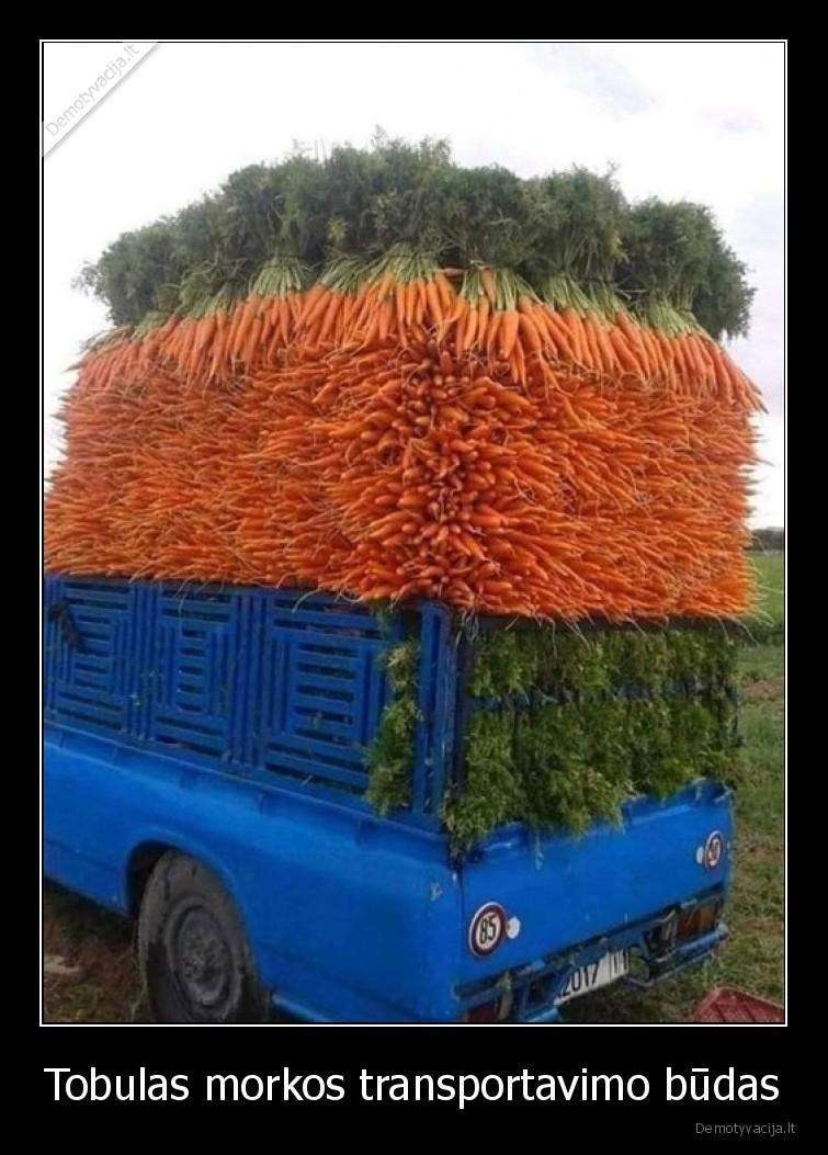 Tobulas morkos transportavimo budas
