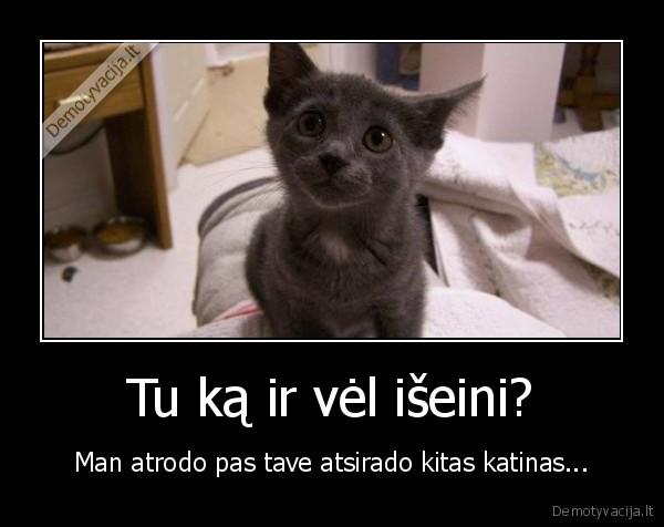 Tu ka ir vel iseini Man atrodo pas tave atsirado kitas katinas