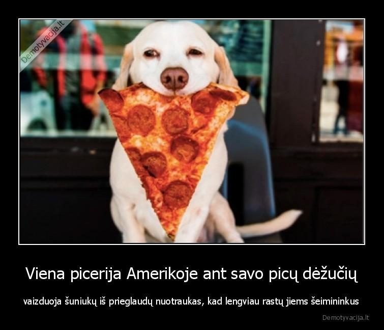 Viena picerija Amerikoje ant savo picu dezuciu vaizduoja suniuku is prieglaudu nuotraukas kad lengviau rastu jiems seimininkus