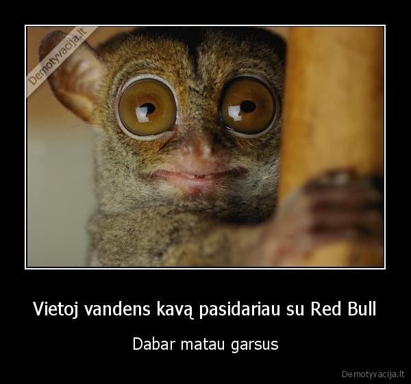 Vietoj vandens kava pasidariau su Red Bull Dabar matau garsus