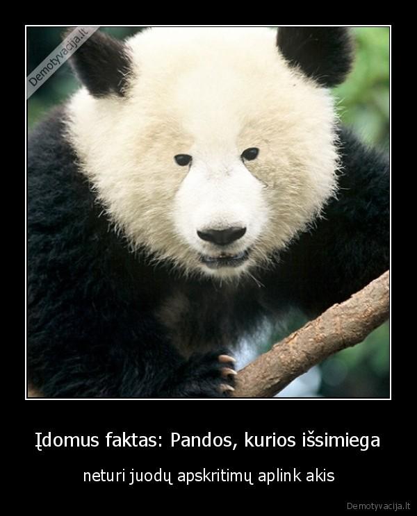 Idomus faktas Pandos kurios issimiega neturi juodu apskritimu aplink akis