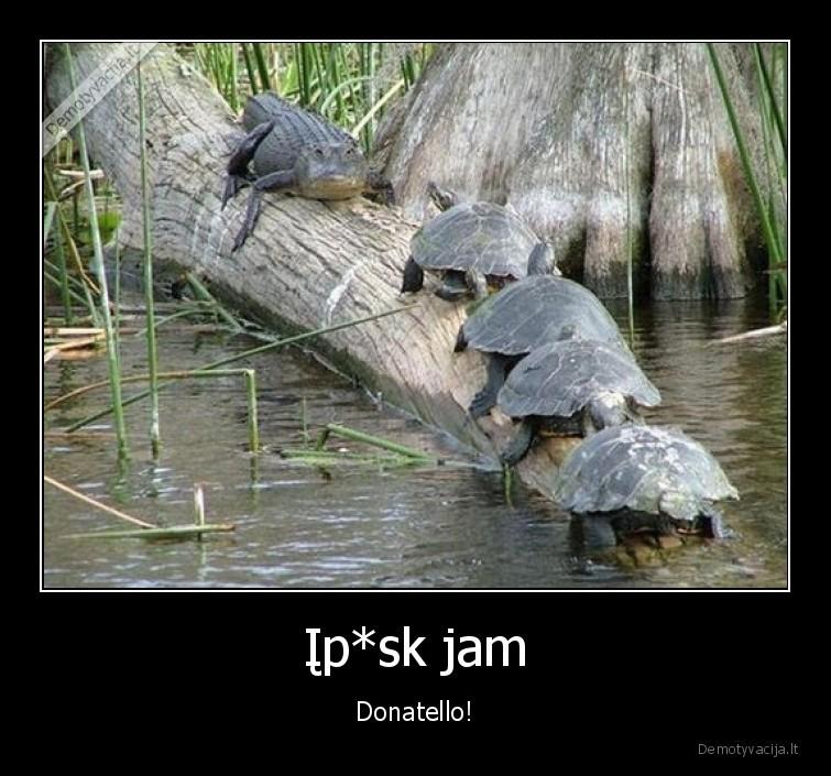 Ipsk jam Donatello