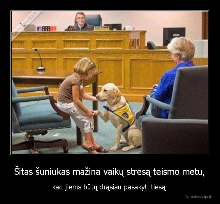 Sitas suniukas mazina vaiku stresa teismo metu kad jiems butu drasiau pasakyti tiesa