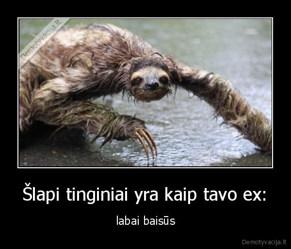 Šlapi tinginiai yra kaip tavo ex:..