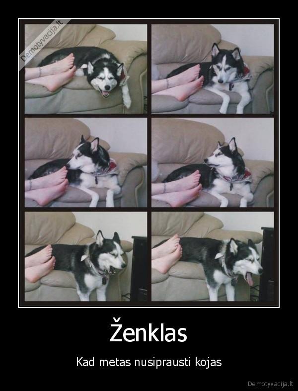 Zenklas Kad metas nusiprausti kojas