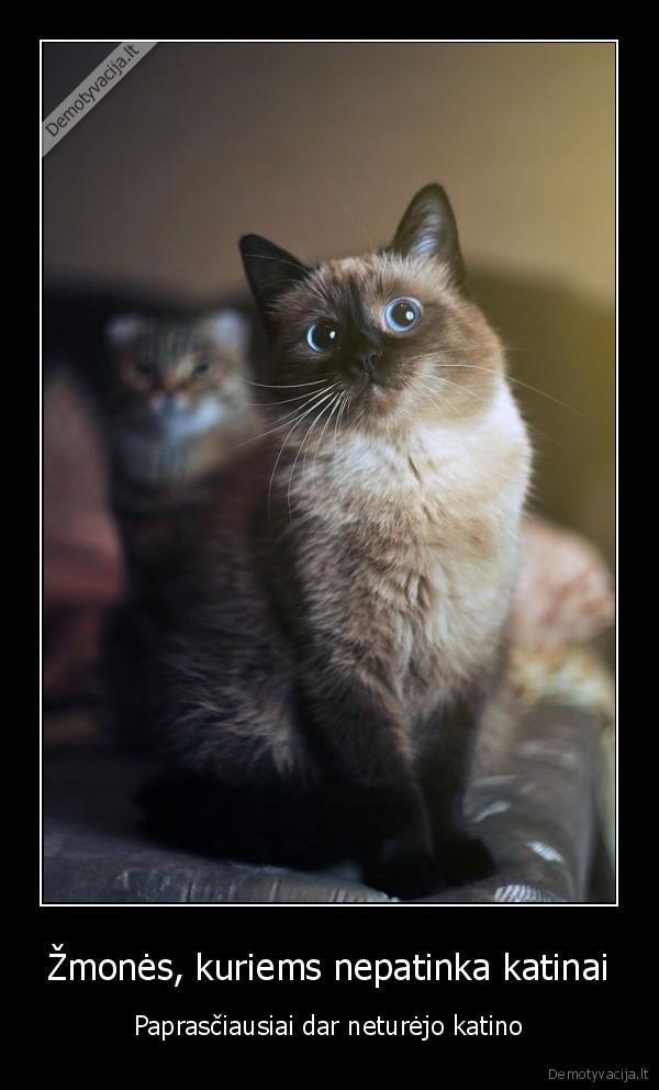 Zmones kuriems nepatinka katinai Paprasciausiai dar neturejo katino